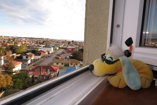 Pilgrim loves looking out the window ! Punta Arenas.